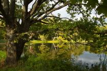 Дворянский пруд