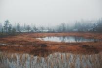 Туман и тишина