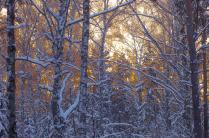 Лес на фоне желтого заката.