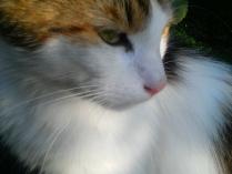 Элегантность кота Василия