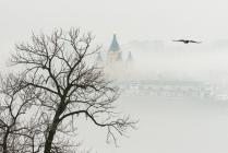 Туман и ворона