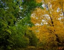 Лето против Осени