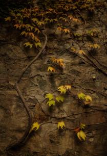 Осенне панно.