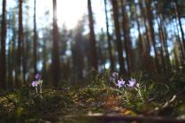 Весной в бору