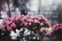Импрессионизм в ботаническом саду