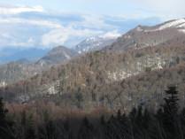 Горный лес зимой