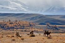 Алтайские контрасты