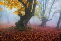 В осеннем туманном лесу