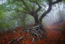Сон деревьев