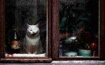 Зевающий Котик