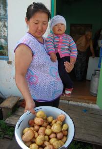 Картошка уродилась