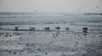 Балтийский берег зимой