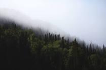 Башкирские джнгли