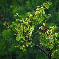 Июльский дождь.