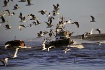 Рыбаки возвращаются домой