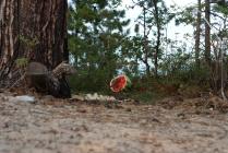 Укрощение арбуза