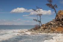 Лед и дерево