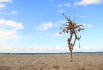 Метеорологическое дерево