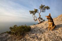 Крымский пейзаж с дворнягой.