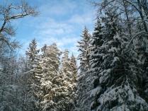 январь в подмосковном лесу