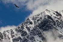 Птица высокого полёта
