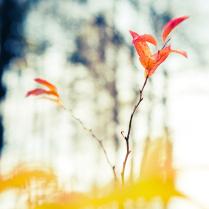 Осенний Огонь