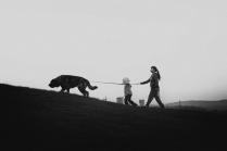 Выгул собаки.