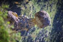 Детеныш каменного великана.