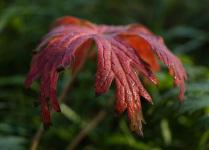 Секреты красок осени