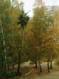 Пальмы средней полосы России.
