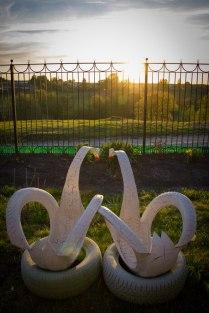 Резиновые лебеди провожают закат
