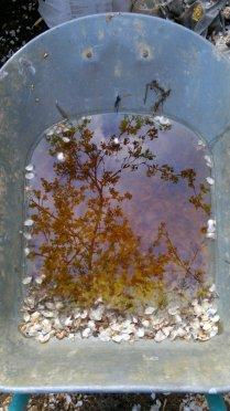 Портрет Весны в дождевом зеркале