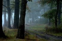 Первый туман осени.