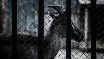 В пермском зоопарке