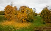 В отражении листвы