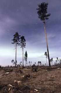 Северные пальмы
