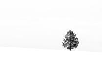 .. дерево ..