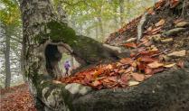 Осенними тропами ...