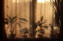 Закатные тени
