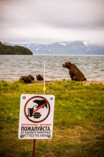 Накормил медведя - убил медведя!
