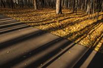 Свет и тени осеннего парка