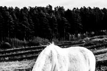 Спина белого коня