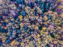 Салтыковские осенние краски