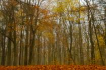 Туманными тропами осени