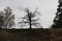 """""""Одинокое дерево"""""""