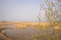 Весна на Ладоге