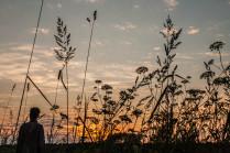 В полевых цветах
