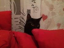 Кот элегантно спрятался от пылесоса