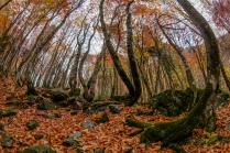 Изящный осенний лес