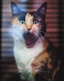 Неожиданность в жизни кота.